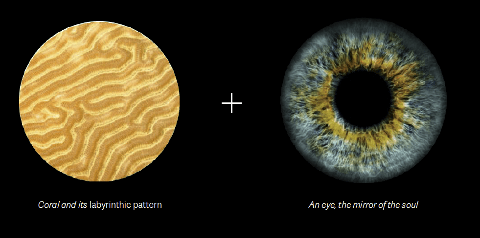 AMAALA-The-Eye-D-brand-identity