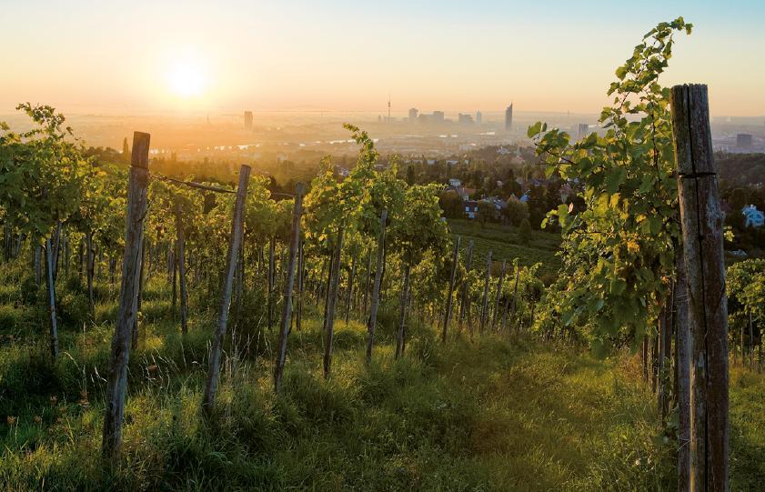 Verde ciudad destino Viena Austria